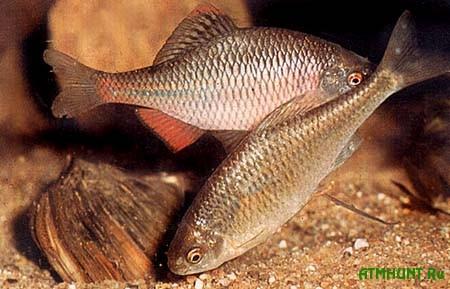 Nikolaevskij brakon'er nalovil ryby na 100 tys. griven