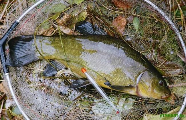 Рыбалка весной в ленинградской области места