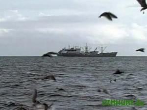Odesskie pogranichniki vygnali iz Chernogo morja tureckih brakon'erov