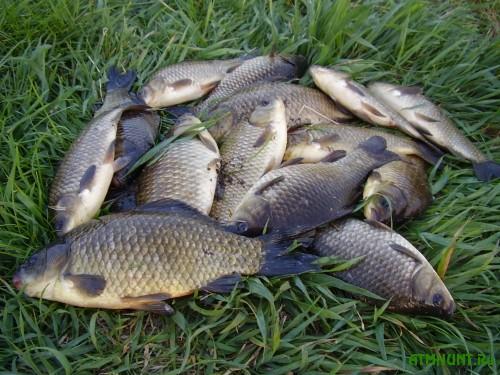 Na Hmel'nitchine zaderzhali celuju gruppu rybnyh brakon'erov