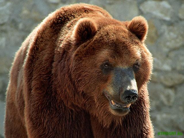 Na Poltavshhine medved' otkusil 12-letnemu rebenku ruku