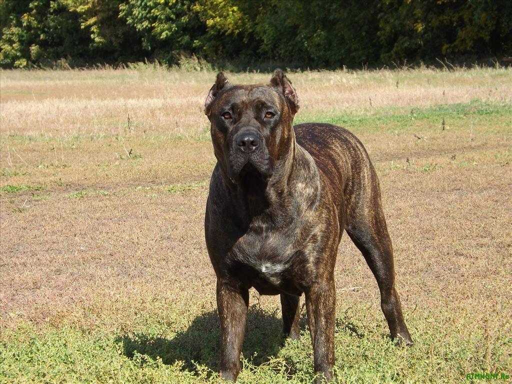 V Velikobritanii zhenshhiny pozvolili svoemu psu s#est' soseda zhiv'em