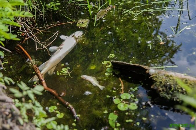 V reke Konik na stolichnom Korchevatom vydohla vsja ryba i ljagushki