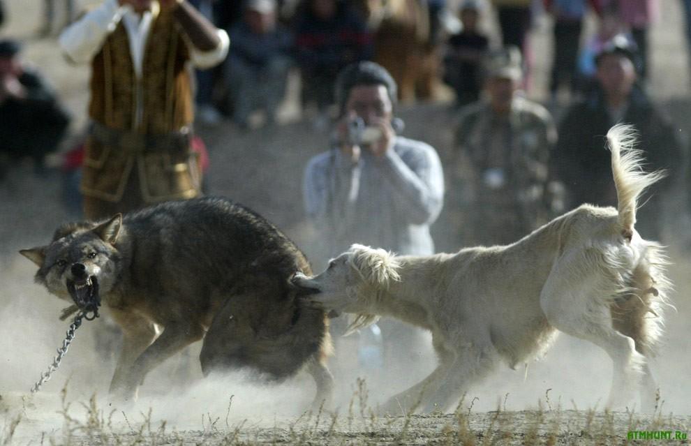 Verhovnaja Rada vstupilas' za medvedej, volkov i del'finov