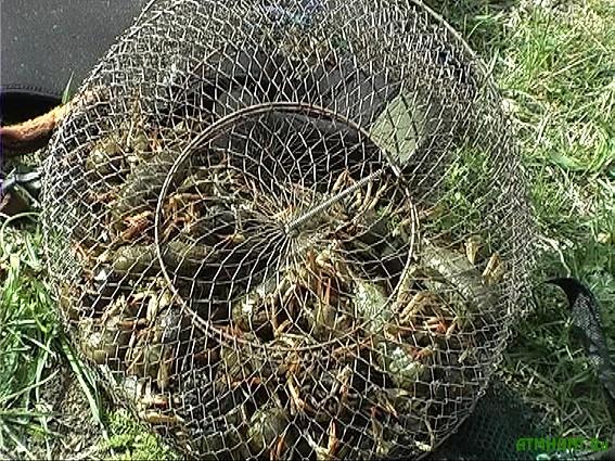 Za nerest brakon'ery Har'kovshhiny uspeli nalovit' ryby na 122 tys. griven