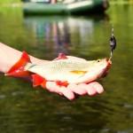 Ловля краснопёрки летом