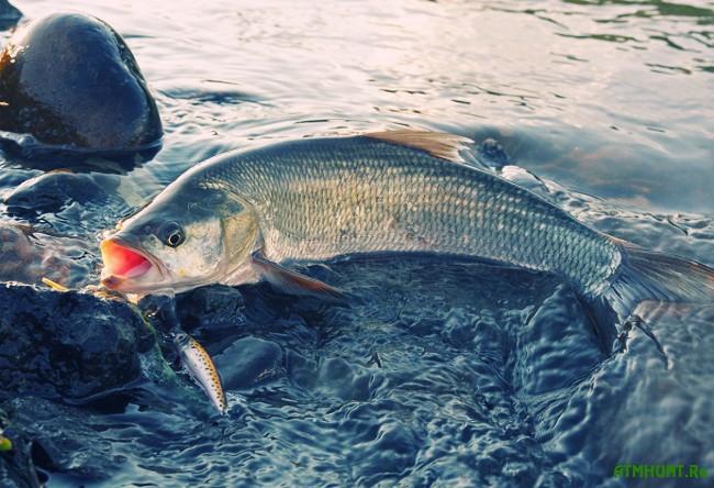 рыбалка в казани на судака