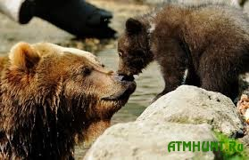 Administracija populjarnogo zooparka Shvejcarii reshila ubit' medvezhonka
