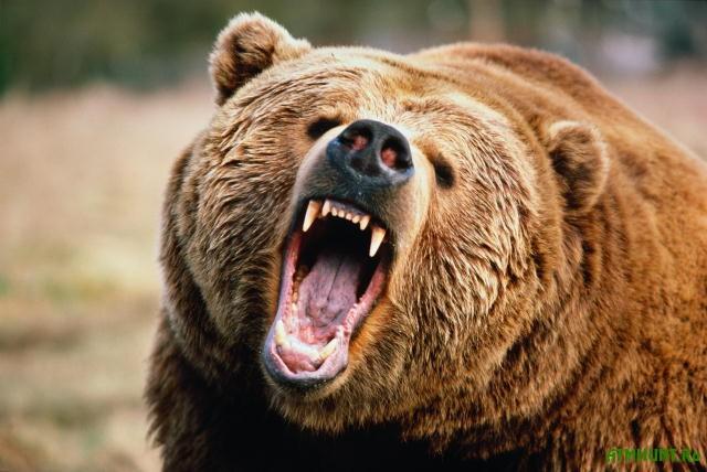 Chto budet s poltavskim medvedem, otkusivshim ruku devochke