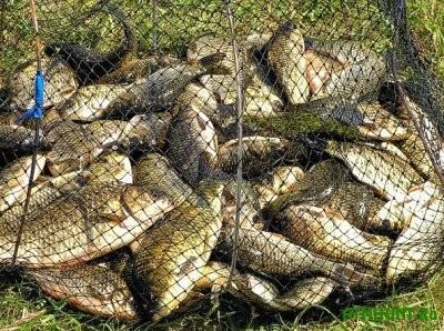 Na Cherkasshhine 4 brakon'era nalovili ryby na 150 tys. griven