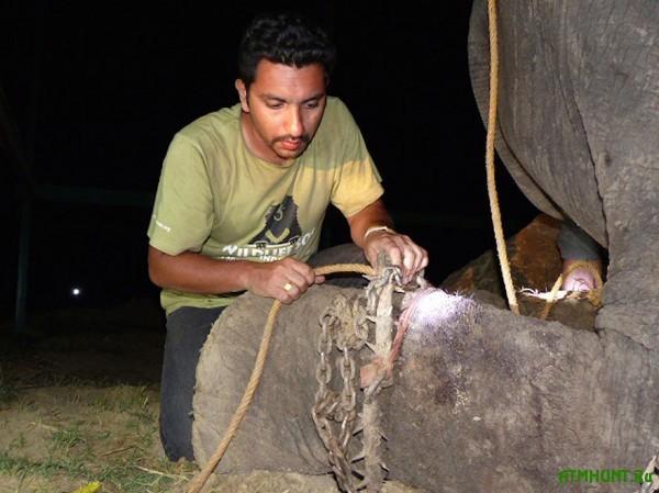 V Indii slon, polveka provedshij v nevole, zaplakal v moment osvobozhdenija