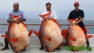 Amerikanskim rybakam za den' udalos' pojmat' tri redchajshie ryby-luny