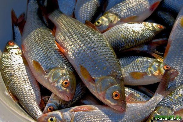 Posle otdelenija Kryma dolja importnoj ryby v Ukraine vyrastet do 95