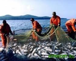 Sevastopol'skie rybaki ne znajut, kuda devat' ulov, i hotjat na rynok RF