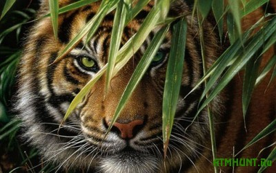 V Indii tigr ukral zhenshhinu