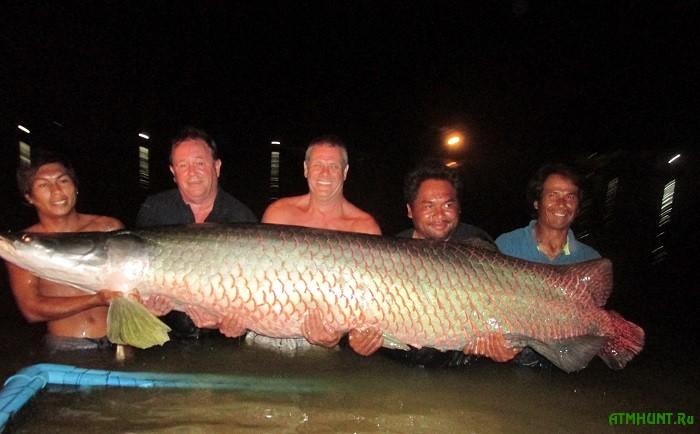 V Tailande na cyplenka pojmali rekordnuju arapajmu vesom 220 kg