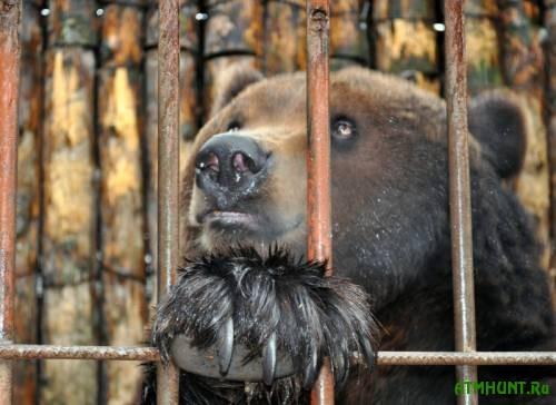 V restoranah i gostinicah Ukrainy zapretjat soderzhat' volkov i medvedej