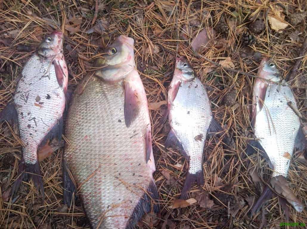 Chernigovskogo brakon'era za 20 rybin oshtrafovali na 5 tys. griven