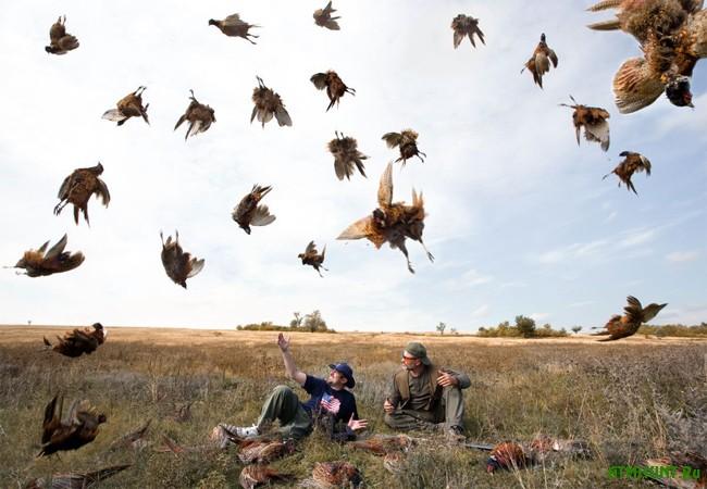 Осенняя охота на фазана