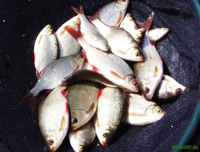 Ловля рыбу на член