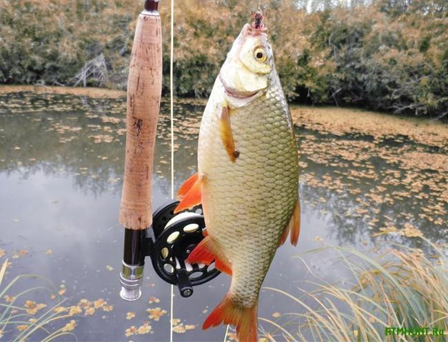 Осенняя рыбалка: хищная красноперка