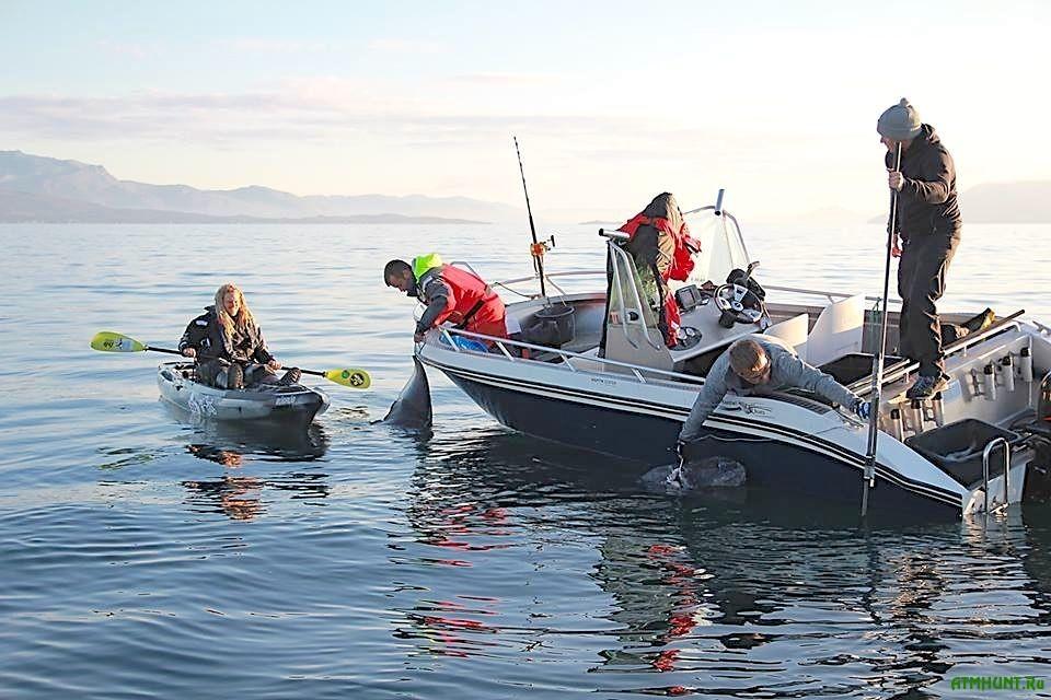 Shvedskij kajaker pojmal 200-letnjuju poljarnuju akulu vesom 560 kg