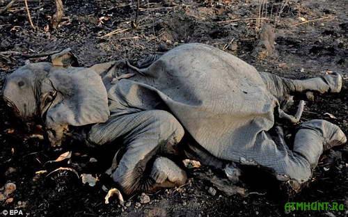 Strany Afriki perepisyvajut zakony dlja bor'by s ubijcami slonov