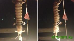 V SShA rybaku popalas' opasnejshaja polumetrovaja krevetka-bogomol