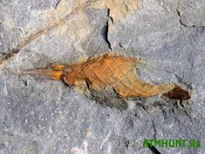 V Velikobritanii nashli jajco akuly vozrastom 310 mln. let