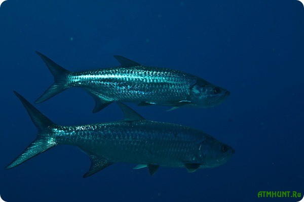 20 tonn dohloj ryby vybrosheno na poberezh'e Rio-de-Zhanejro