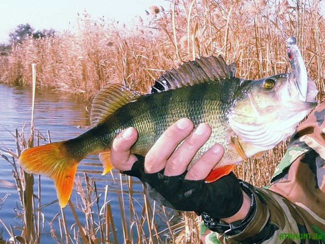 ловля осенняя рыбалка
