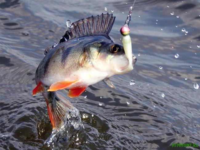 скачать торрент рыбалка на окуня - фото 7