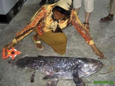 V Indonezii rybaku v seti popalas' iskopaemaja ryba celakant (foto)2