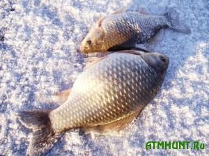 ловля карася зимой
