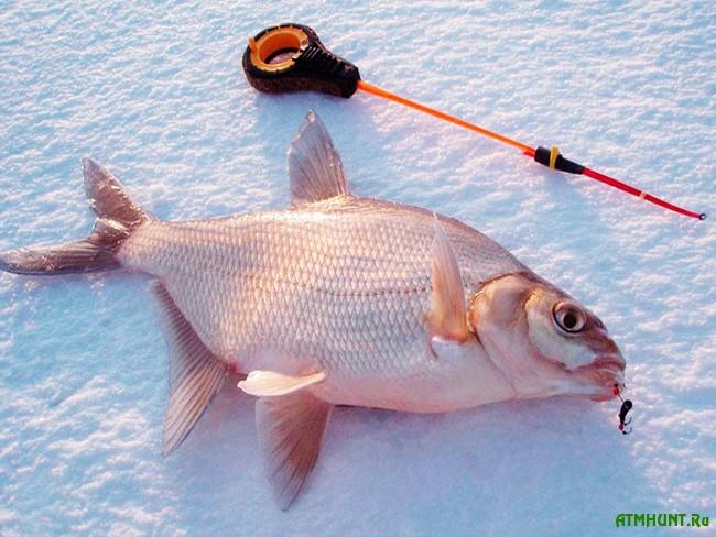 Поиск места и выбор снасти для ловли леща зимой