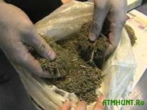 V Rossii pojmali rybaka, prikarmlivavshego rybu marihuanoj