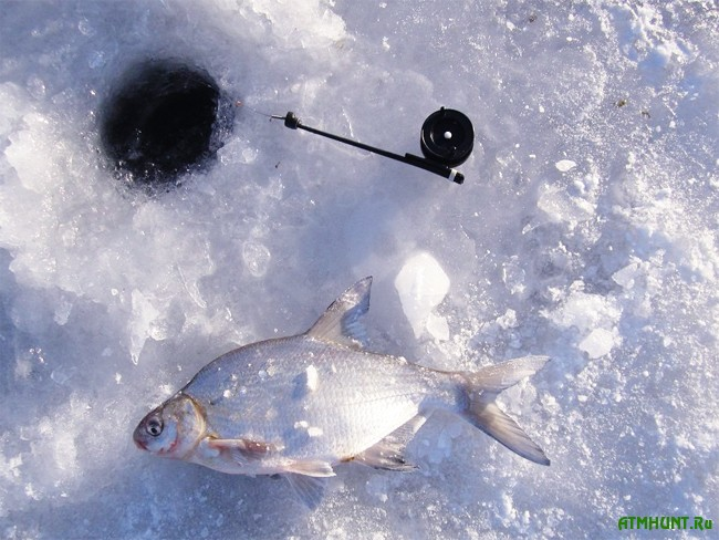 Зимняя ловля леща: тактика и техника