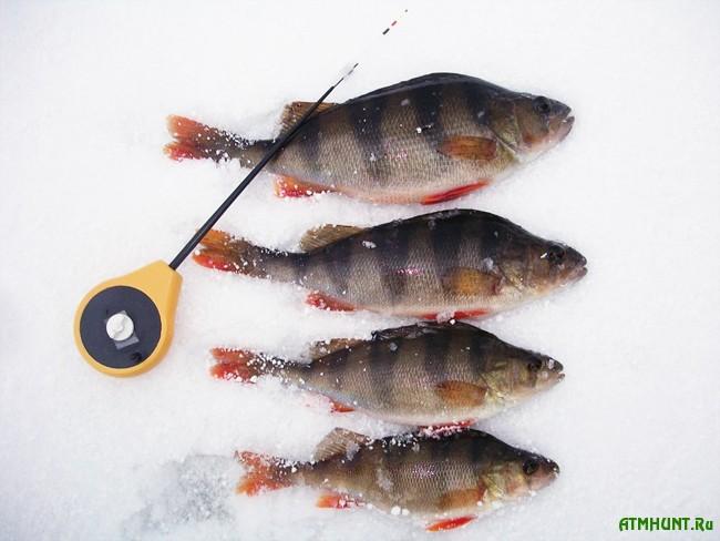 Зимняя рыбалка: ловля окуня на мормышку