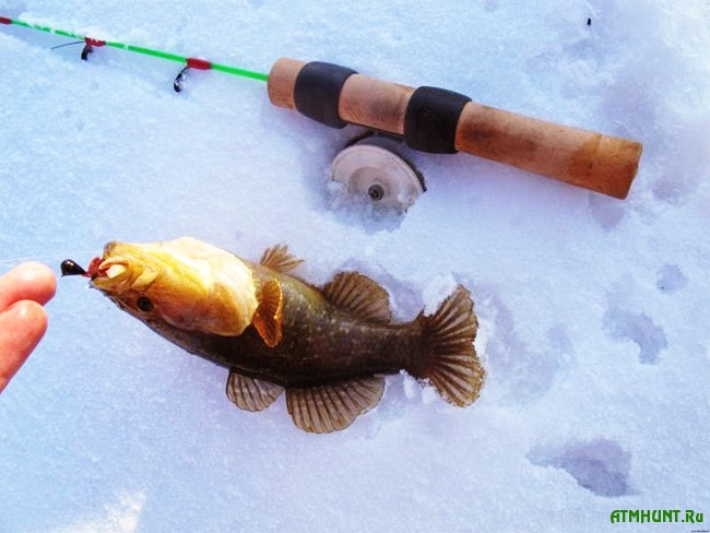 на что клюет рыба зимой