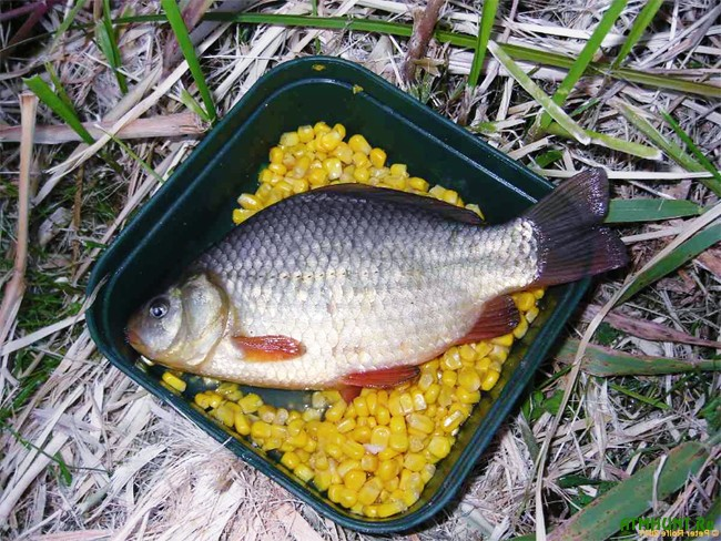 рыбалка для карася