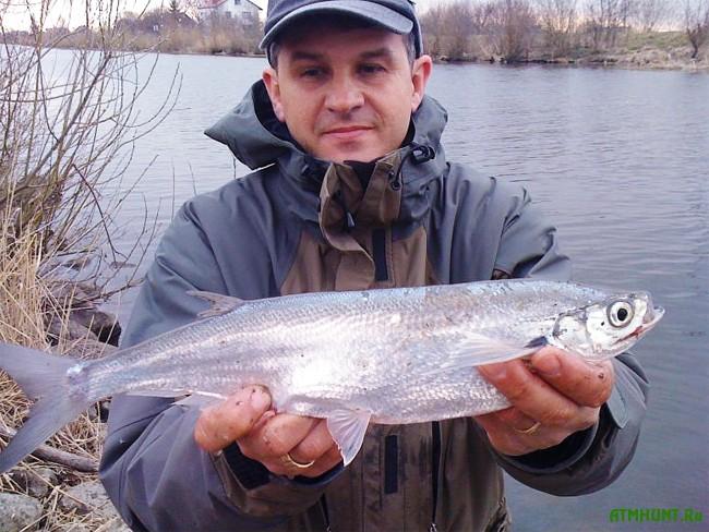 рыбалка на чехонь