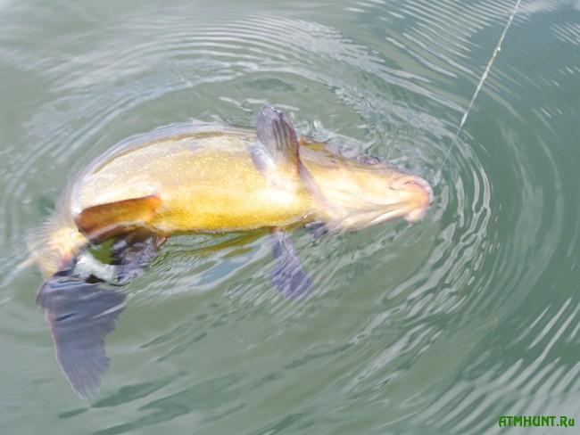 Весенняя рыбалка на линя