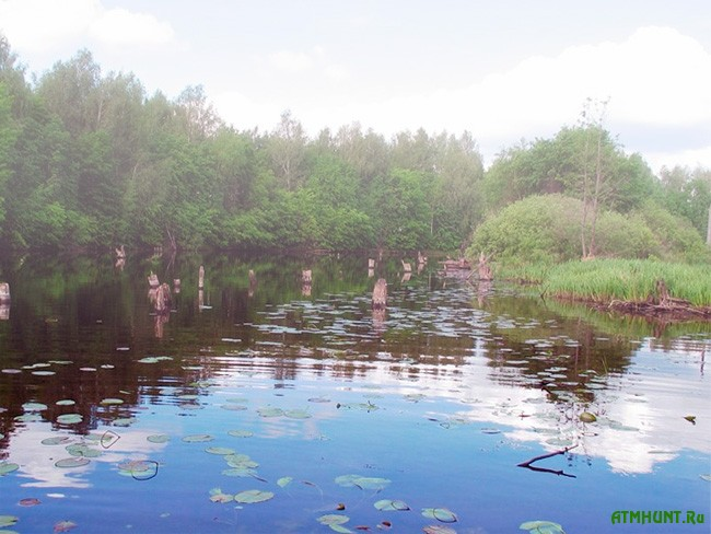 прикормка для реки весной