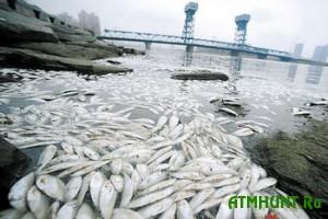 Na berega V'etnama vybrosilo desjatki tonn mertvoj ryby