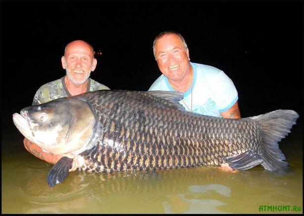 V Tailande pojmali 80-killogramovogo karpa na nazhivku iz praha zajadlogo rybaka