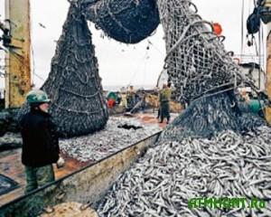 Kuda podevalsja krupnejshij v mire ukrainskij ryboloveckij flot