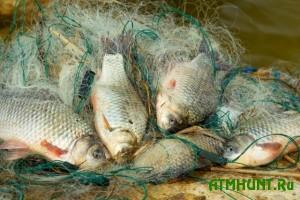 kostroma_fish_hunters