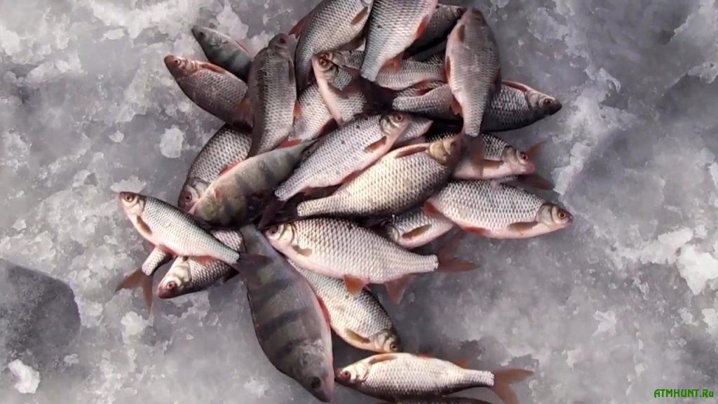 Рыбалка на Горьковском водохранилище